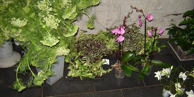 Thierry Polart - Plantes